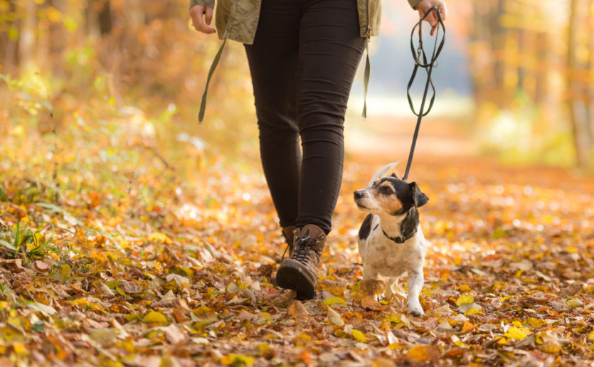 Taking a 30-minute daily walk is a good way to stay active.