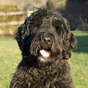 A Portuguese water dog, Magellan's intelligence and kindly nature made him an excellent pet therapy dog.