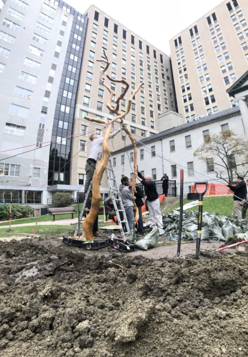 "Mass General Building and Grounds staff assisted with the installation of ""Open Arms,"" a sculpture by Harold Grinspoon."