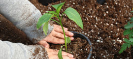 Gardening is one summer learning activity that can benefit kids.
