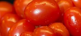 Tomatoesbanner2