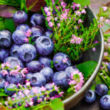 A diet for aging well might include blueberries and other foods that contain anthocyanidins, plant chemicals whose consumption is associated with slower cognitive decline.