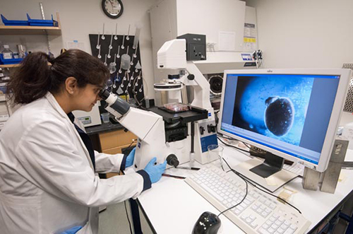 Annie Kathuria, PhD, uses a computer to examine a brain organoid grown from the stem cells of a schizophrenia patient.