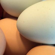 egg_banner