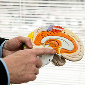 John Kelly, Ph.D., points out the pleasure center in the brain