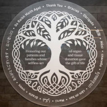 The Mass General Transplant Center's new Donor Memorial Tree took more than two years to design and install.